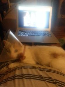 Kitten demanding cuddle time